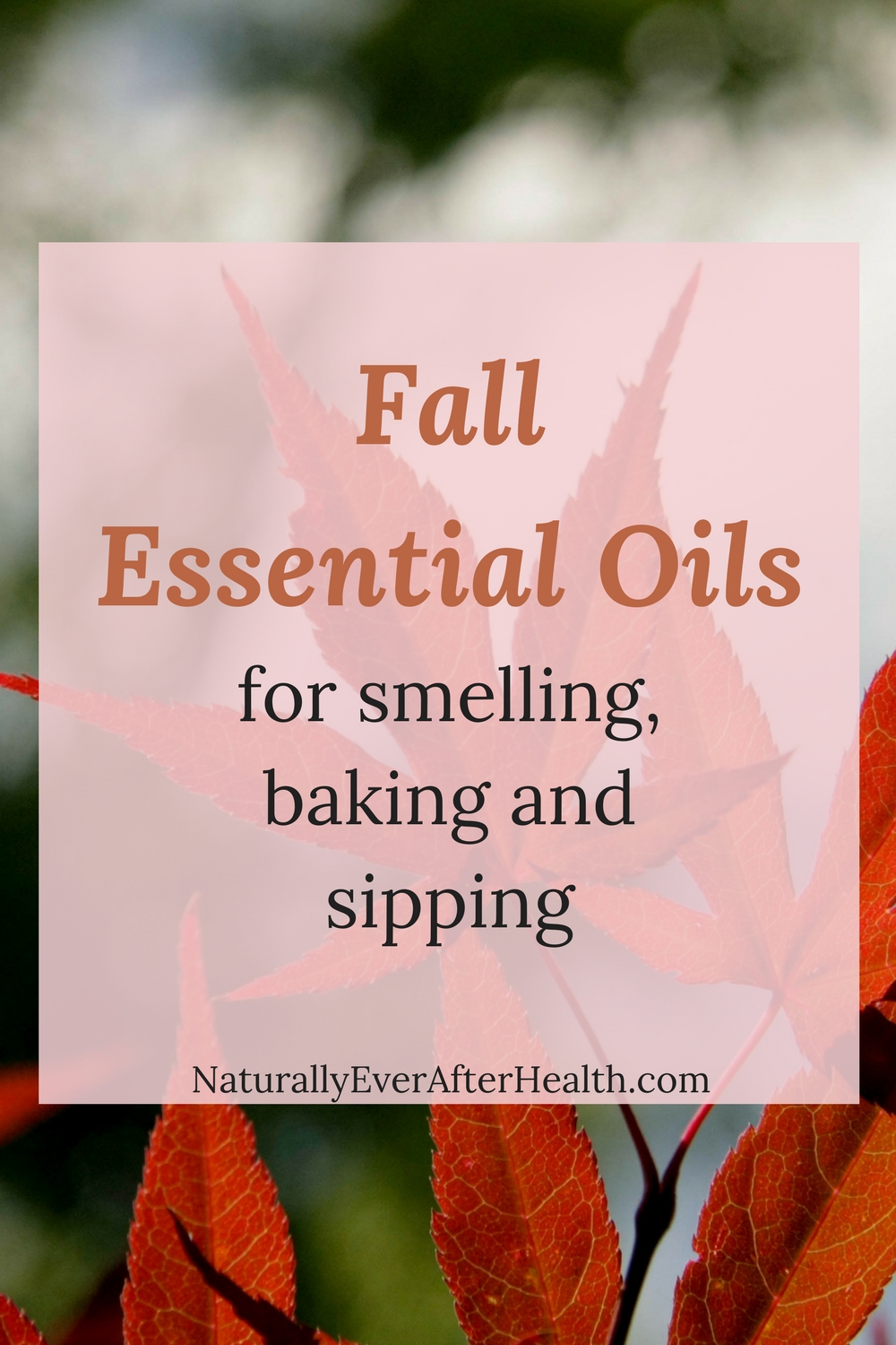 Do you want your house to smell like autumn without all of the chemicals of candles? Here's your guide to fall essential oils! Find the best ones for smelling, baking and sipping.